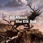 All About the Elk Rut